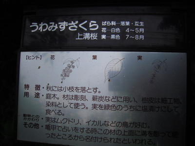20120518_8