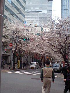 桜も咲いて〜