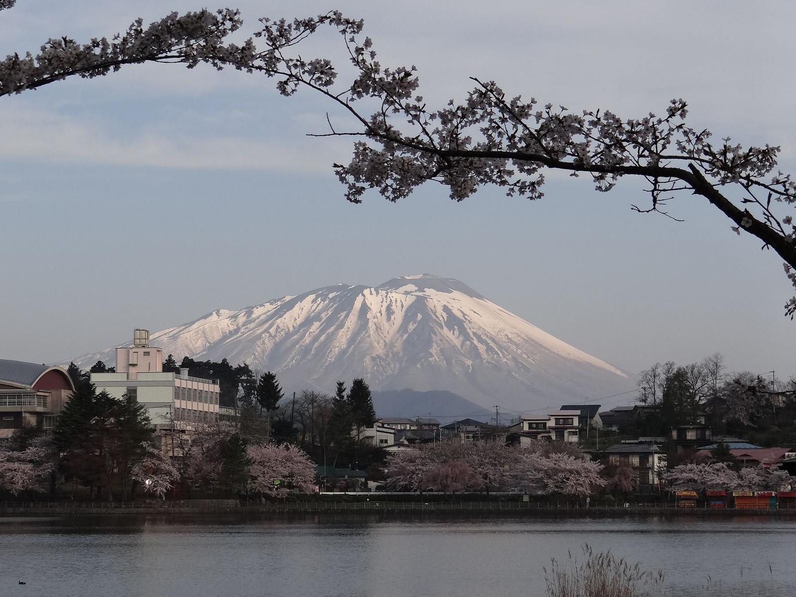 Sakura_27